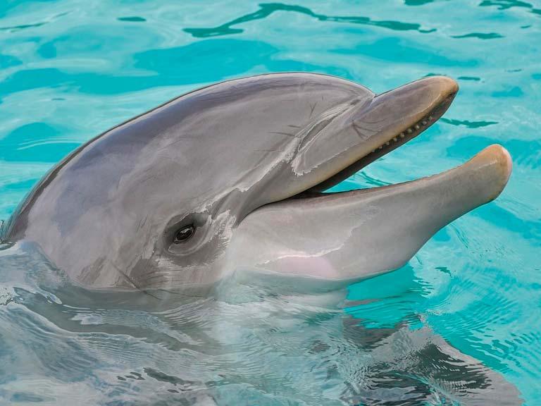 Nado con delfines: vive una experiencia inolvidable.